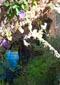 Vegetation in Buscastell